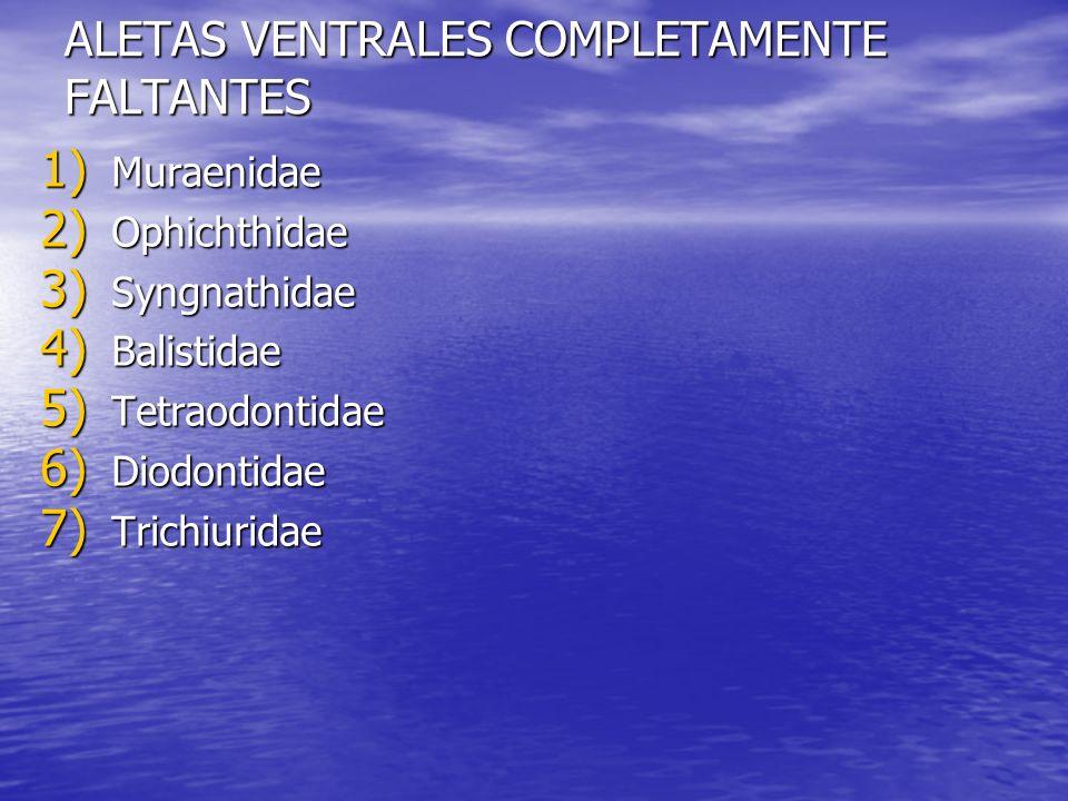 ALETAS VENTRALES COMPLETAMENTE FALTANTES