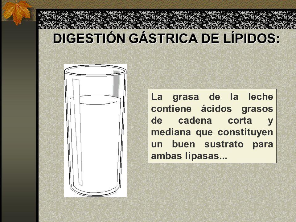 DIGESTIÓN GÁSTRICA DE LÍPIDOS:
