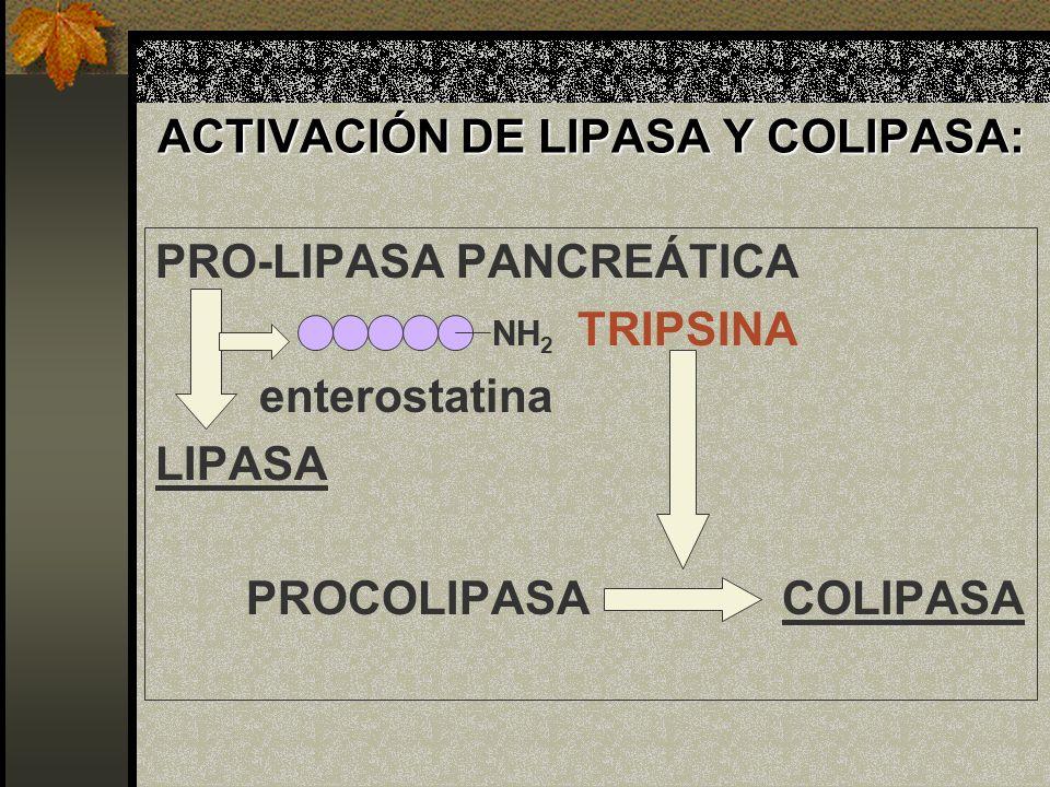 ACTIVACIÓN DE LIPASA Y COLIPASA: