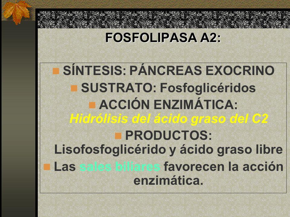 SÍNTESIS: PÁNCREAS EXOCRINO SUSTRATO: Fosfoglicéridos