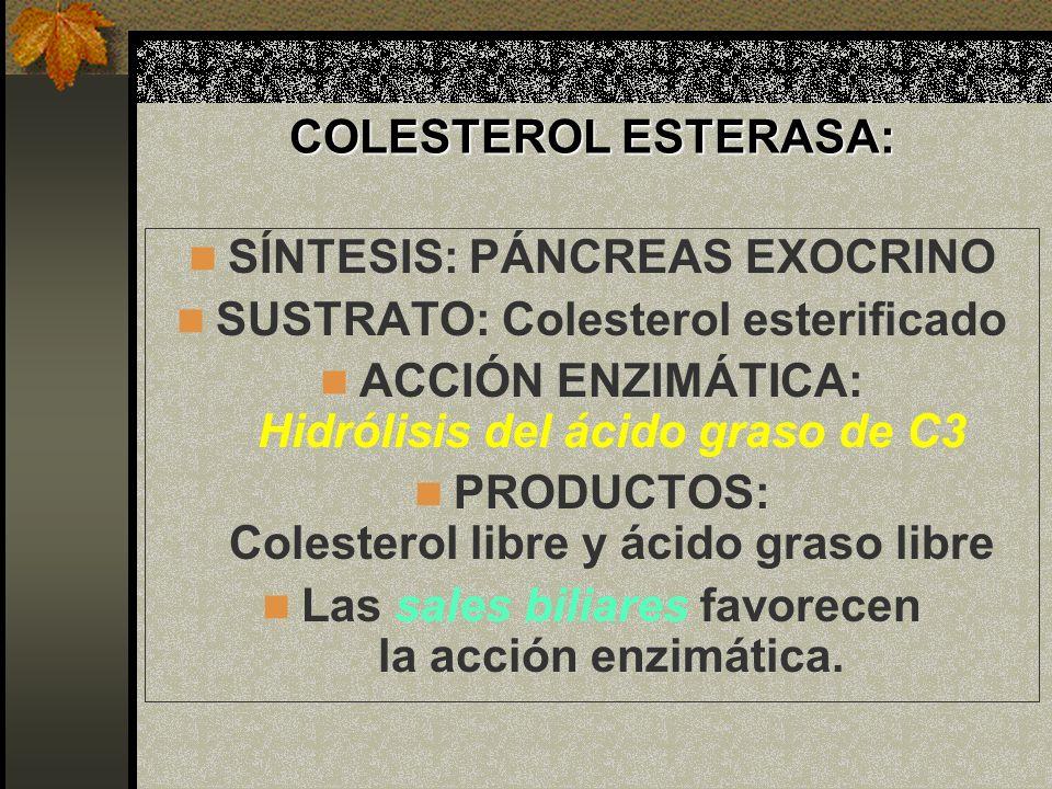 SÍNTESIS: PÁNCREAS EXOCRINO SUSTRATO: Colesterol esterificado
