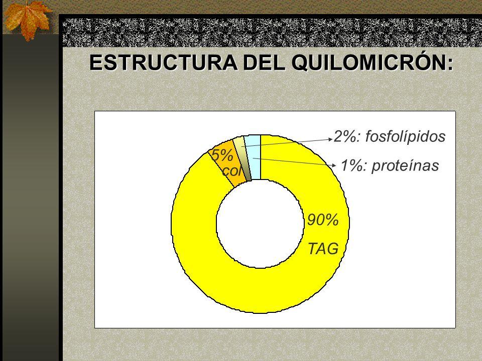 ESTRUCTURA DEL QUILOMICRÓN: