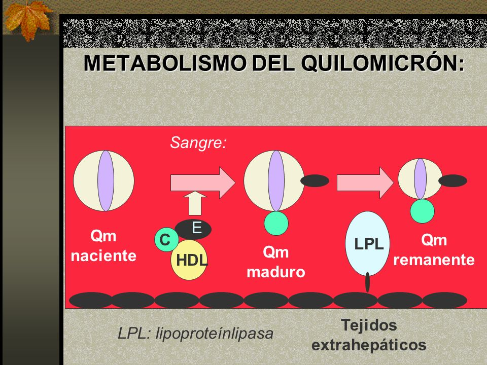 METABOLISMO DEL QUILOMICRÓN: