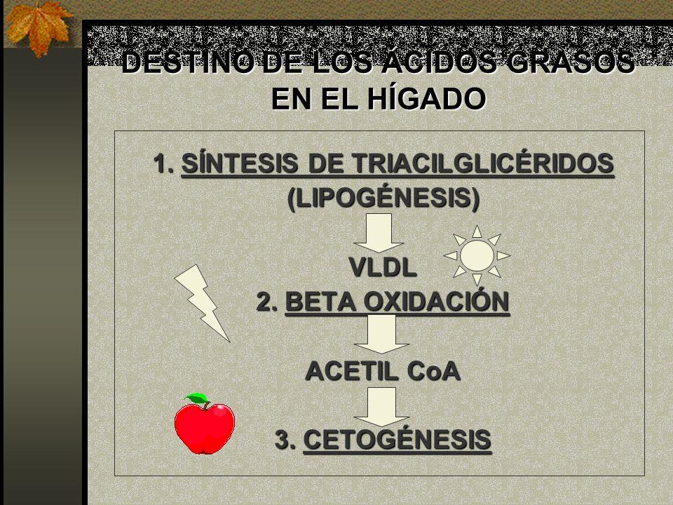DESTINO DE LOS ÁCIDOS GRASOS EN EL HÍGADO