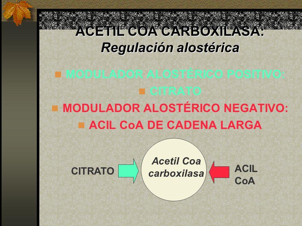ACETIL COA CARBOXILASA: Regulación alostérica
