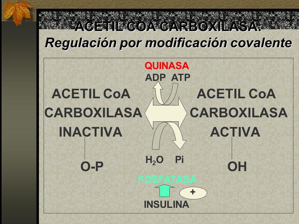ACETIL COA CARBOXILASA: Regulación por modificación covalente