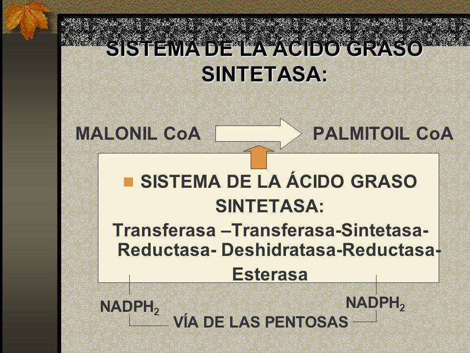 SISTEMA DE LA ÁCIDO GRASO SINTETASA: