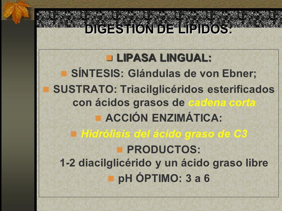 DIGESTIÓN DE LÍPIDOS: LIPASA LINGUAL: