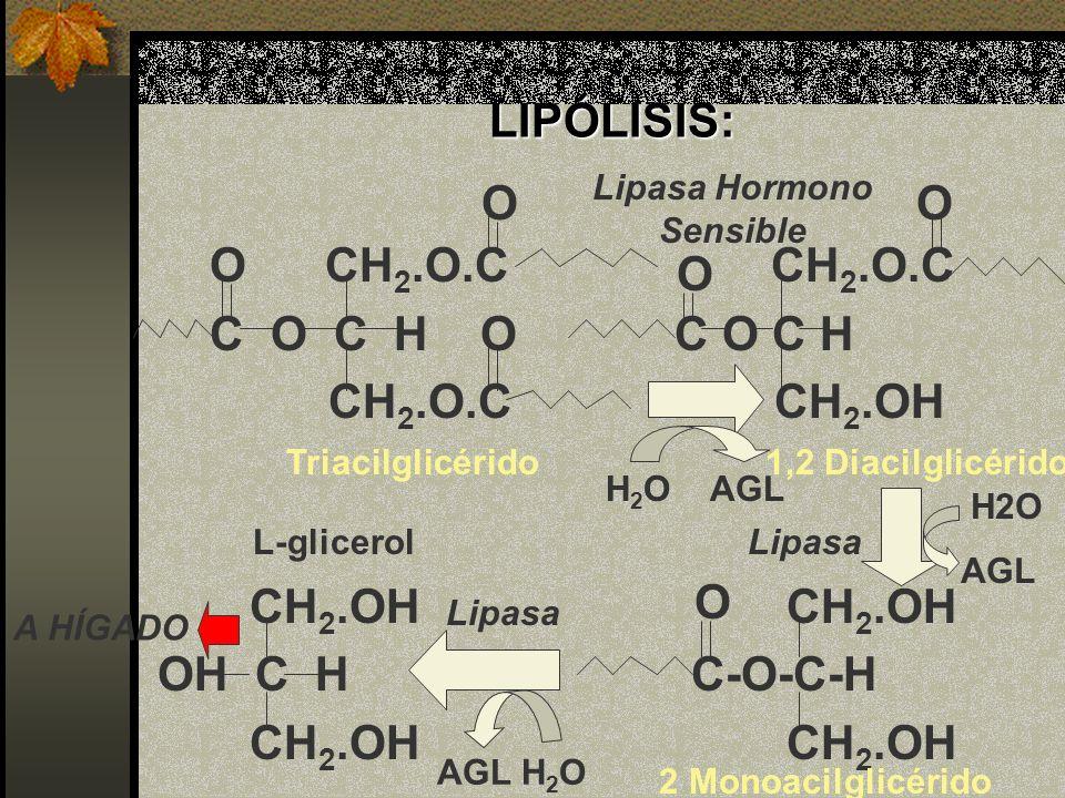Lipasa Hormono Sensible