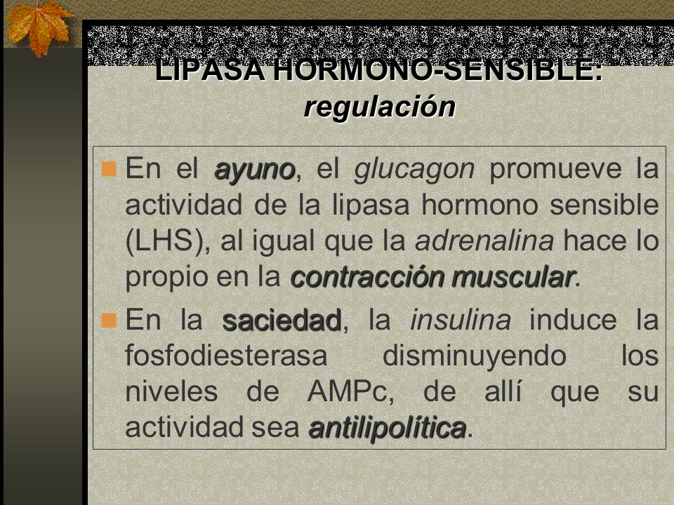 LIPASA HORMONO-SENSIBLE: regulación