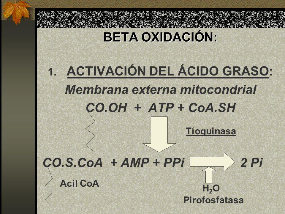 ACTIVACIÓN DEL ÁCIDO GRASO: Membrana externa mitocondrial