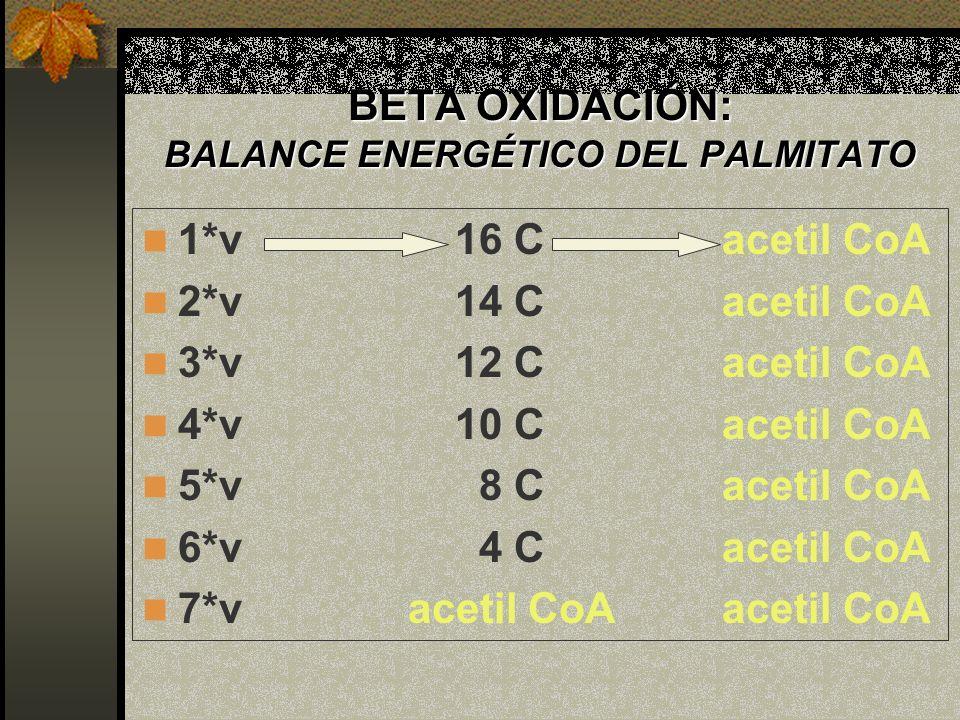 BETA OXIDACIÓN: BALANCE ENERGÉTICO DEL PALMITATO