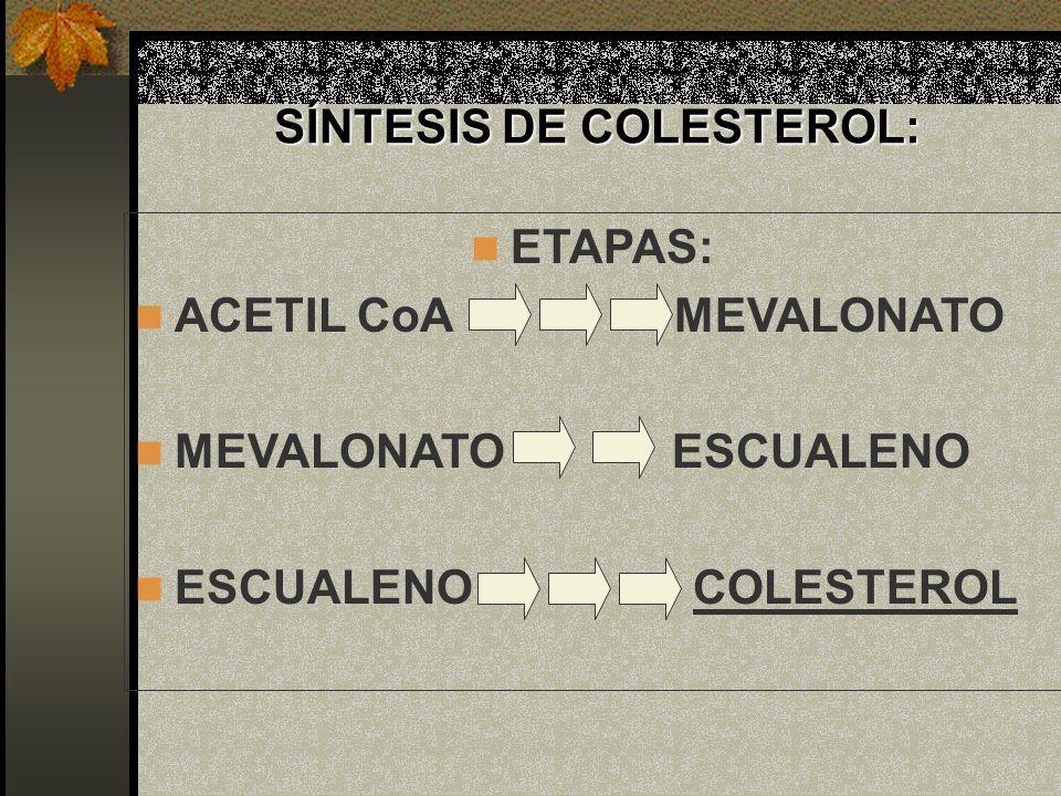 SÍNTESIS DE COLESTEROL: