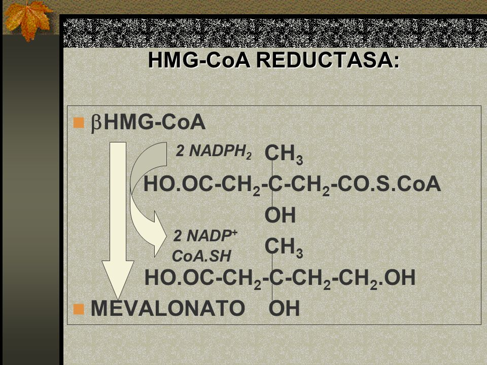HMG-CoA REDUCTASA: HO.OC-CH2-C-CH2-CO.S.CoA