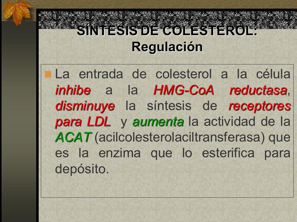 SÍNTESIS DE COLESTEROL: Regulación