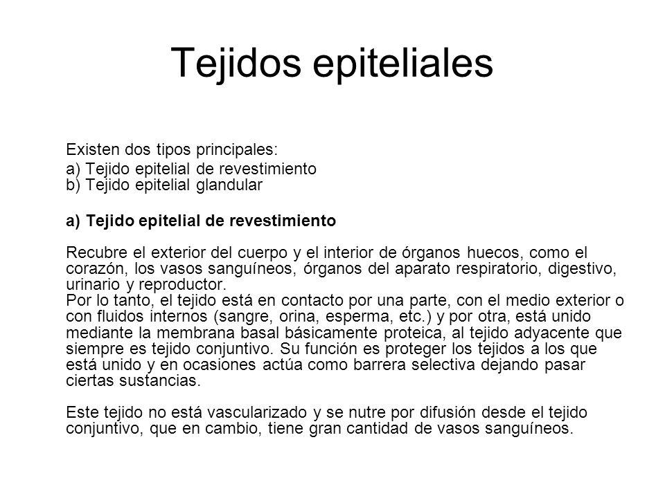 Tejidos epiteliales Existen dos tipos principales: