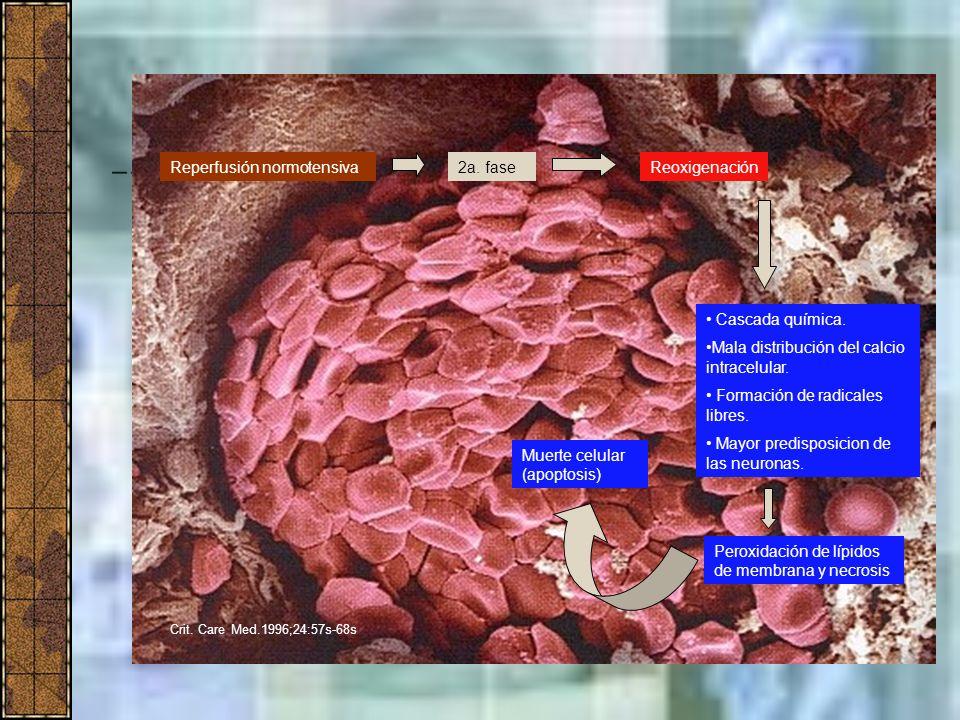 Reperfusión normotensiva 2a. fase Reoxigenación