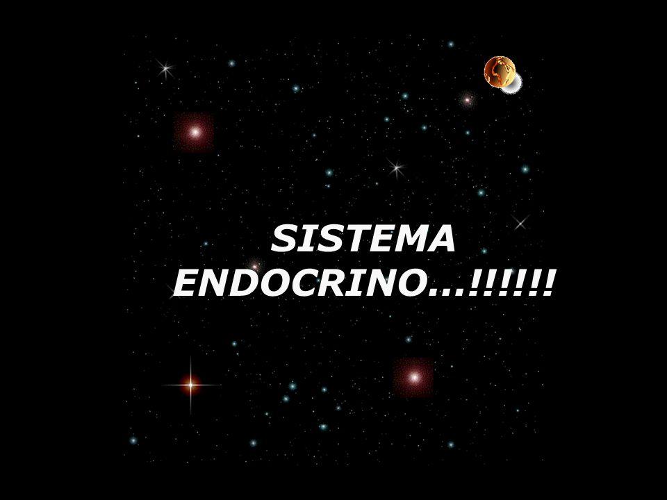 SISTEMA ENDOCRINO...!!!!!!