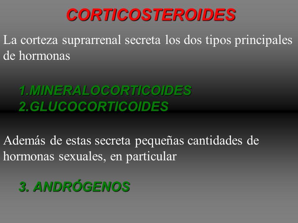 CORTICOSTEROIDES La corteza suprarrenal secreta los dos tipos principales de hormonas. MINERALOCORTICOIDES.