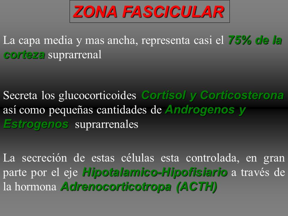 ZONA FASCICULARLa capa media y mas ancha, representa casi el 75% de la corteza suprarrenal.