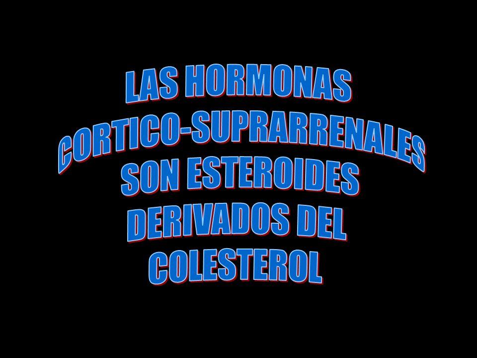 CORTICO-SUPRARRENALES