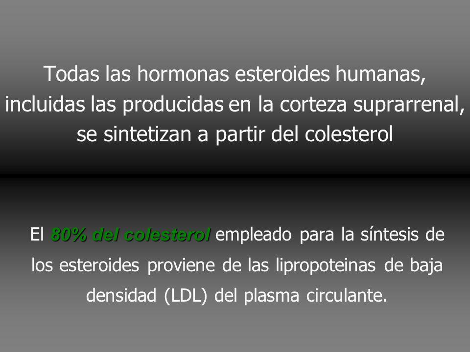 Todas las hormonas esteroides humanas, incluidas las producidas en la corteza suprarrenal, se sintetizan a partir del colesterol