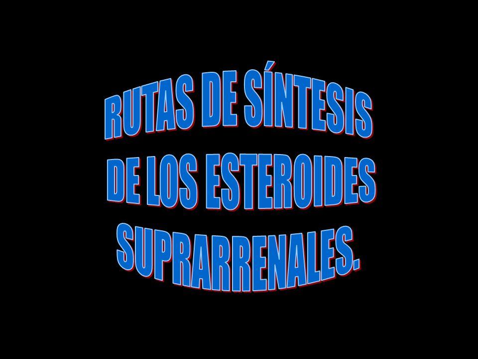 RUTAS DE SÍNTESIS DE LOS ESTEROIDES SUPRARRENALES.