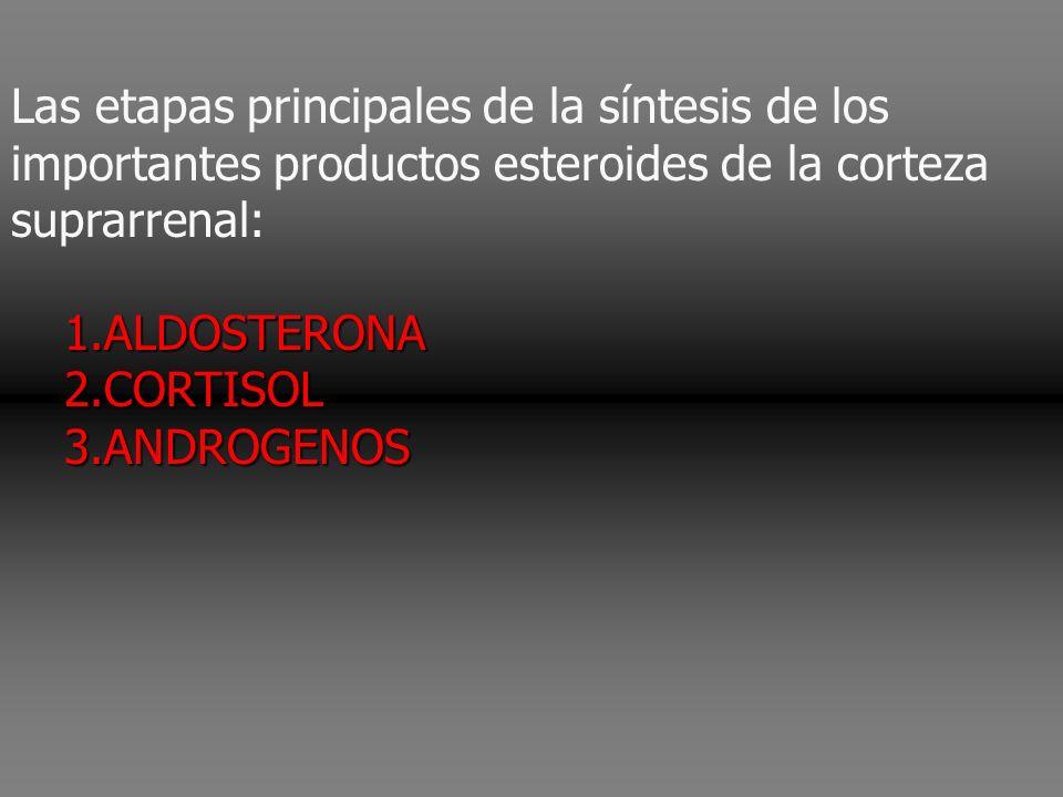 Las etapas principales de la síntesis de los importantes productos esteroides de la corteza suprarrenal: