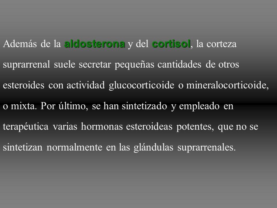 Además de la aldosterona y del cortisol, la corteza suprarrenal suele secretar pequeñas cantidades de otros esteroides con actividad glucocorticoide o mineralocorticoide, o mixta.