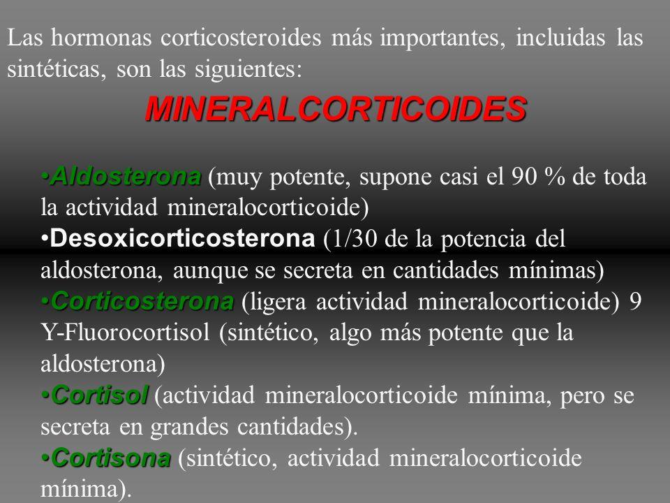 Las hormonas corticosteroides más importantes, incluidas las sintéticas, son las siguientes: