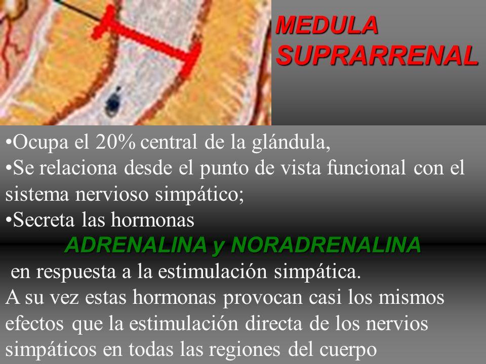 ADRENALINA y NORADRENALINA