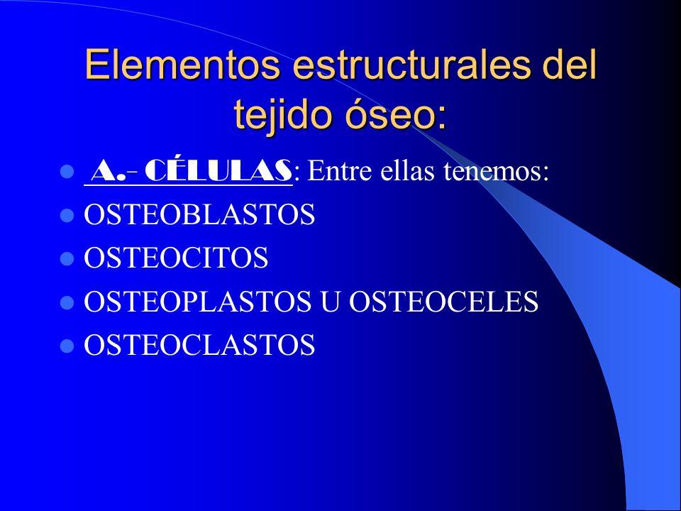 Elementos estructurales del tejido óseo: