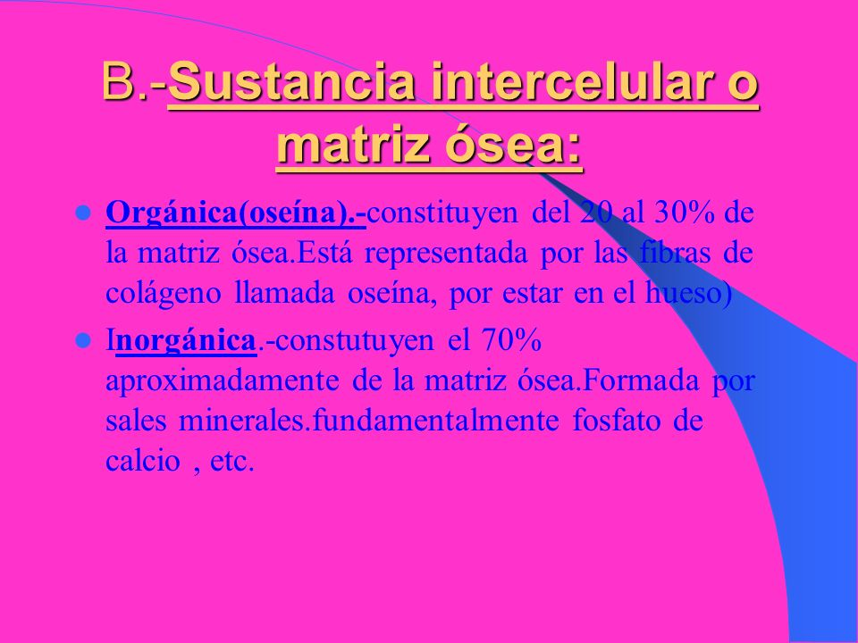 B.-Sustancia intercelular o matriz ósea: