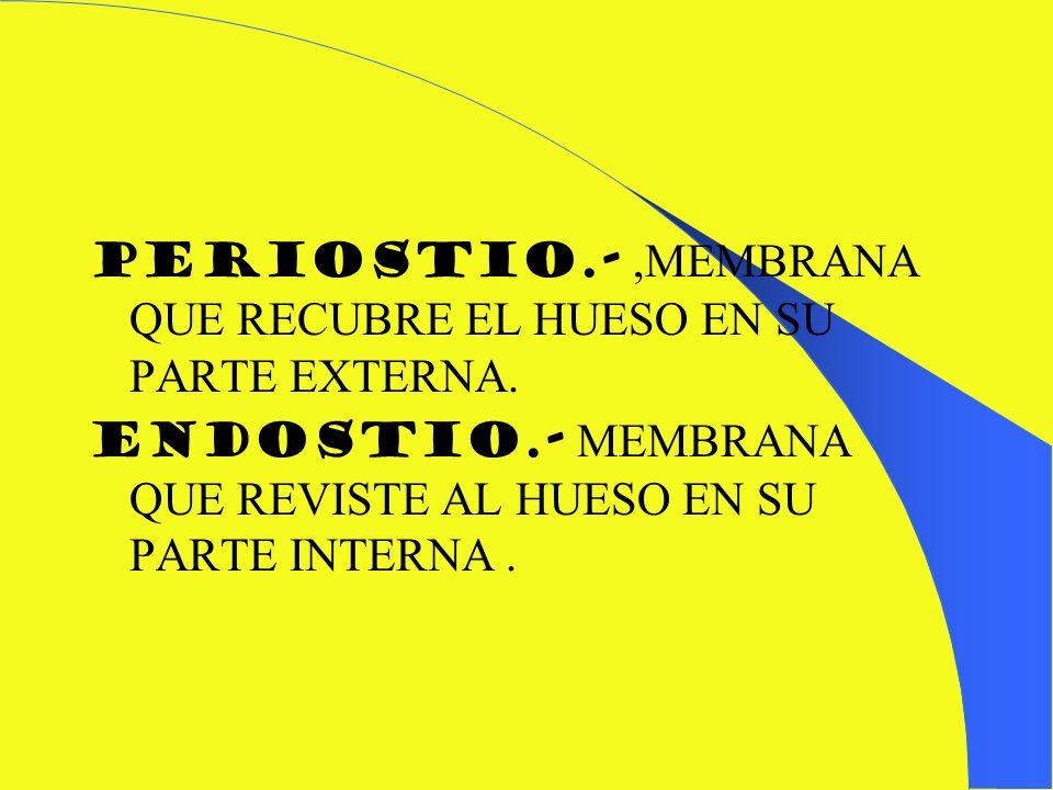 PERIOSTIO.- ,MEMBRANA QUE RECUBRE EL HUESO EN SU PARTE EXTERNA.