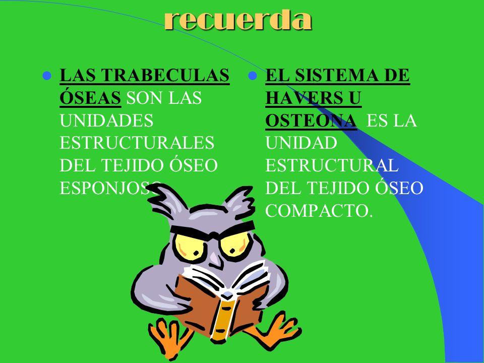 recuerdaLAS TRABECULAS ÓSEAS SON LAS UNIDADES ESTRUCTURALES DEL TEJIDO ÓSEO ESPONJOSO.