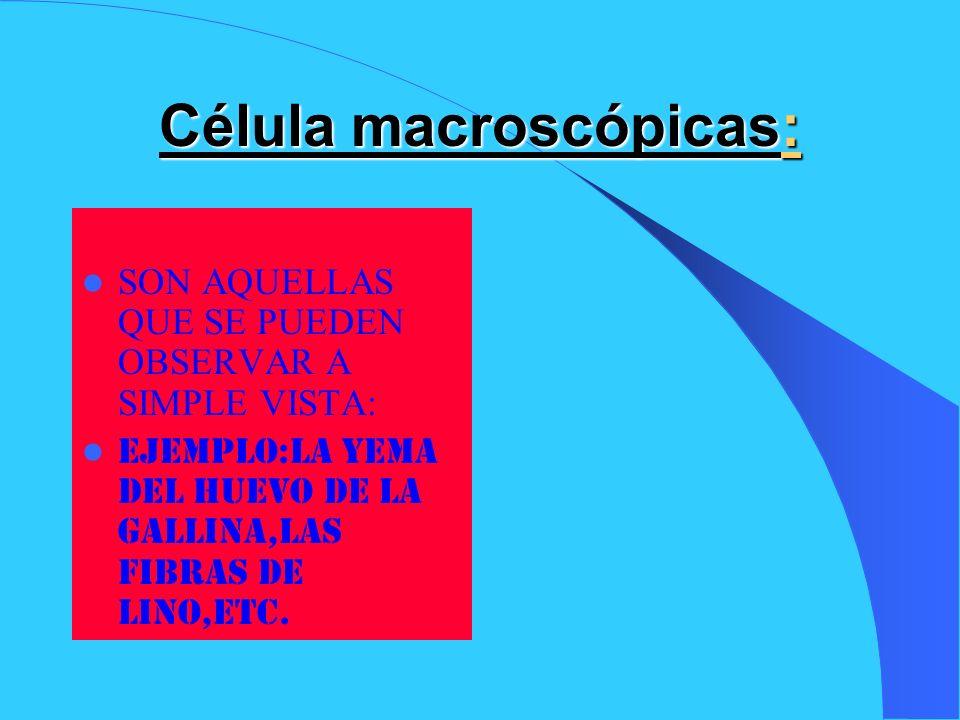 Célula macroscópicas: