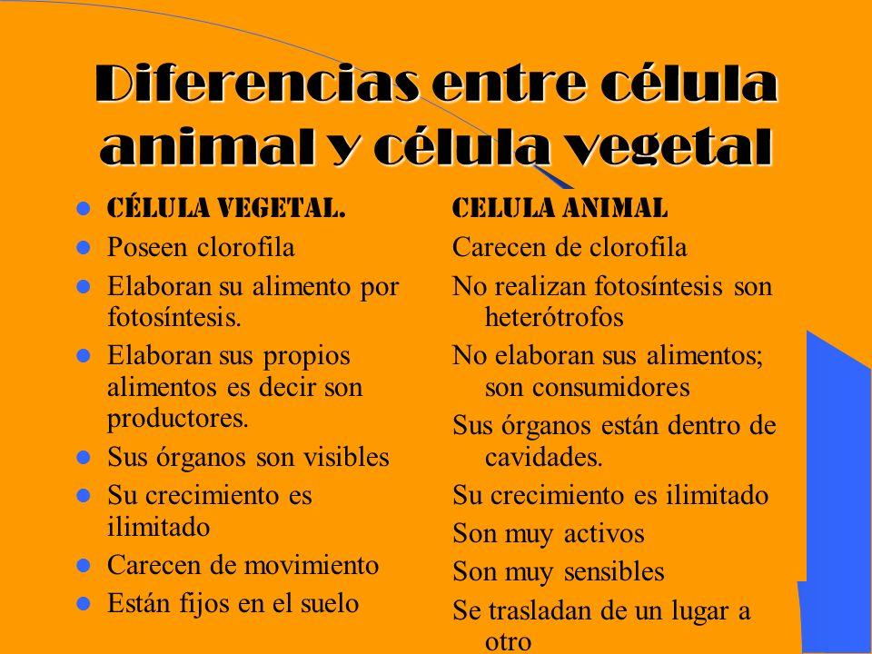 Diferencias entre célula animal y célula vegetal