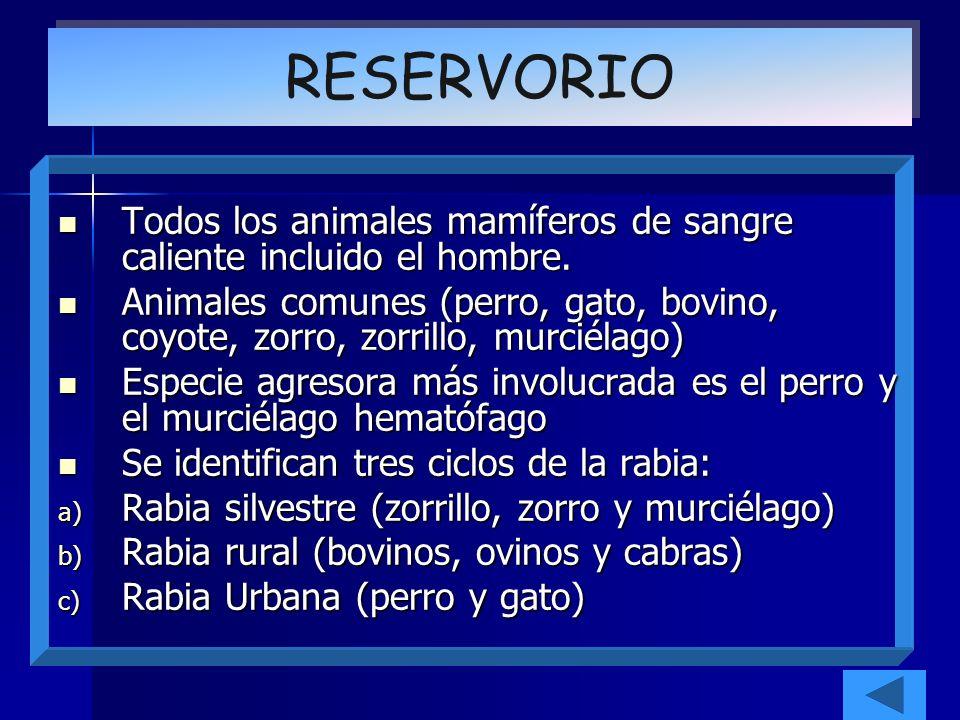 RESERVORIO Todos los animales mamíferos de sangre caliente incluido el hombre.