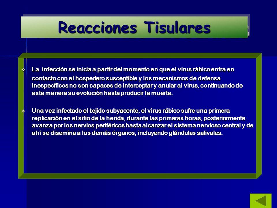 REACCIONES TISULARES Reacciones Tisulares