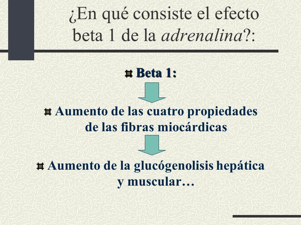¿En qué consiste el efecto beta 1 de la adrenalina :