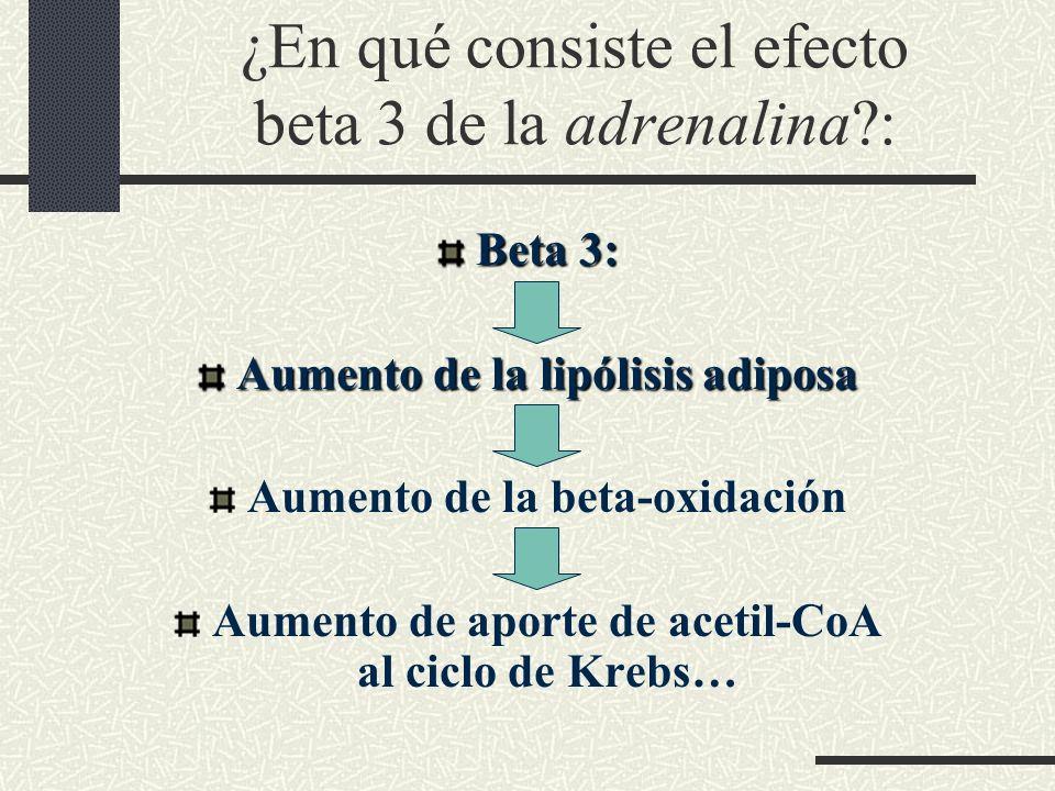¿En qué consiste el efecto beta 3 de la adrenalina :