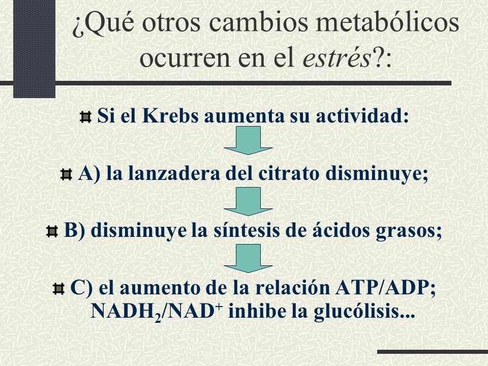 ¿Qué otros cambios metabólicos ocurren en el estrés :