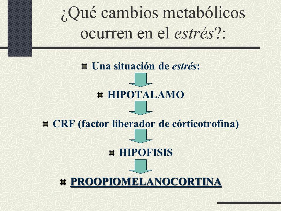 ¿Qué cambios metabólicos ocurren en el estrés :