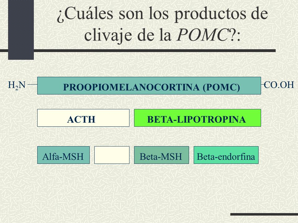 ¿Cuáles son los productos de clivaje de la POMC :