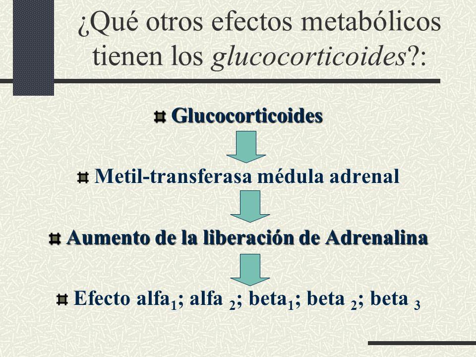 ¿Qué otros efectos metabólicos tienen los glucocorticoides :