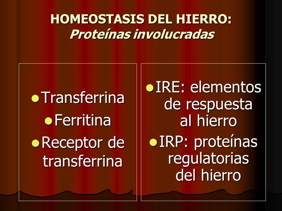 HOMEOSTASIS DEL HIERRO: Proteínas involucradas