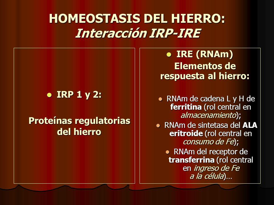 HOMEOSTASIS DEL HIERRO: Interacción IRP-IRE