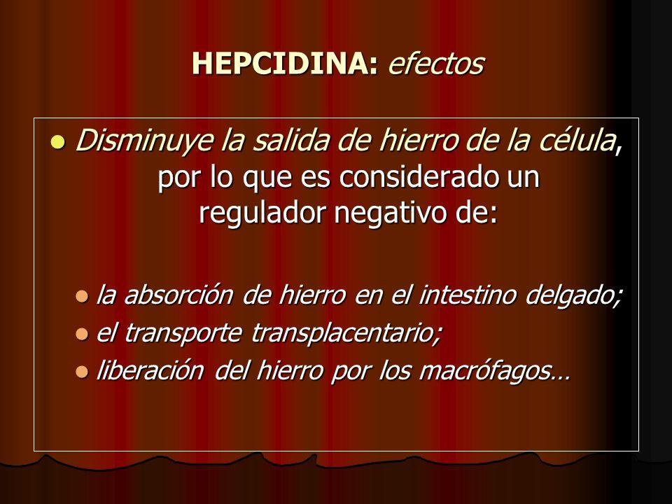 HEPCIDINA: efectos Disminuye la salida de hierro de la célula, por lo que es considerado un regulador negativo de: