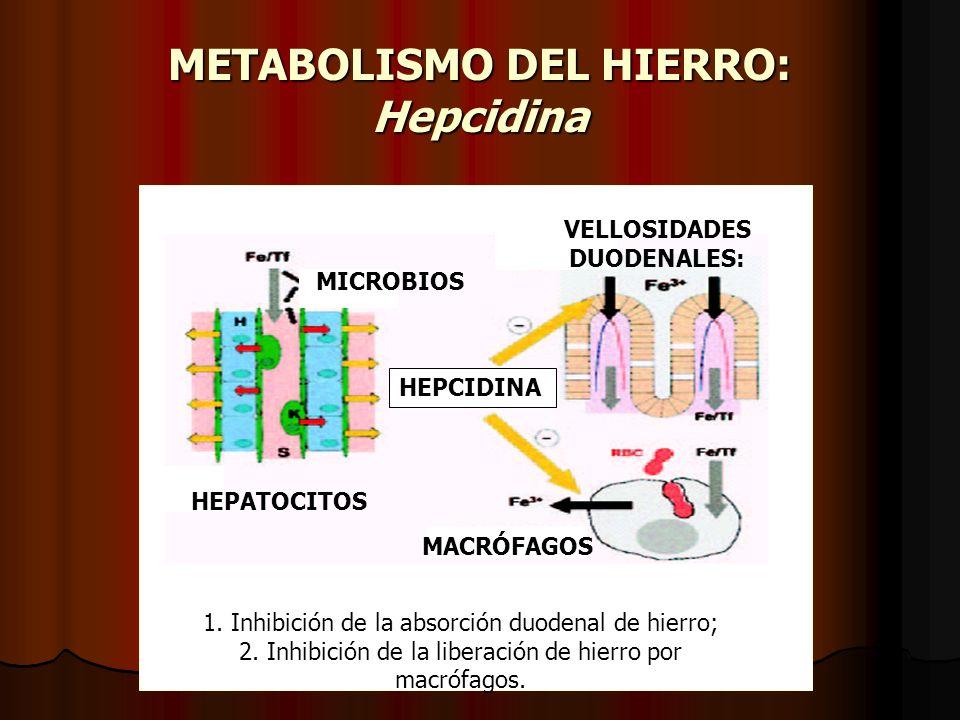 METABOLISMO DEL HIERRO: Hepcidina