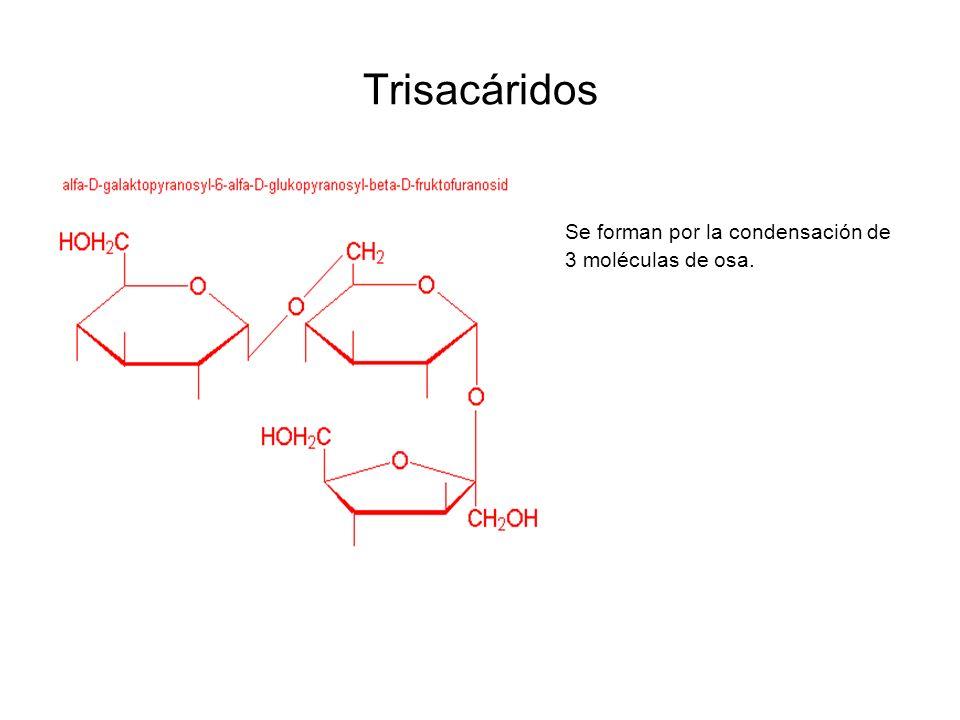 Trisacáridos Se forman por la condensación de 3 moléculas de osa.
